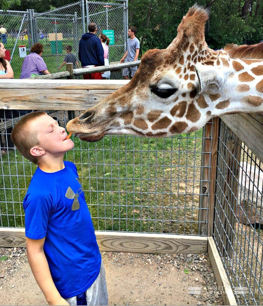 Minocqua, Wildwood Wildlife Park, Zoo, Feed Giraffe