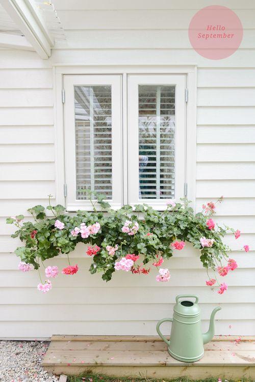 Cottage Style, Wndowboxes, Geraniums