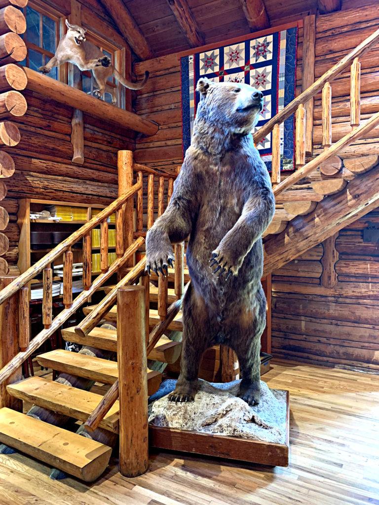 Kodiak bear mount Flathead Lake Lodge