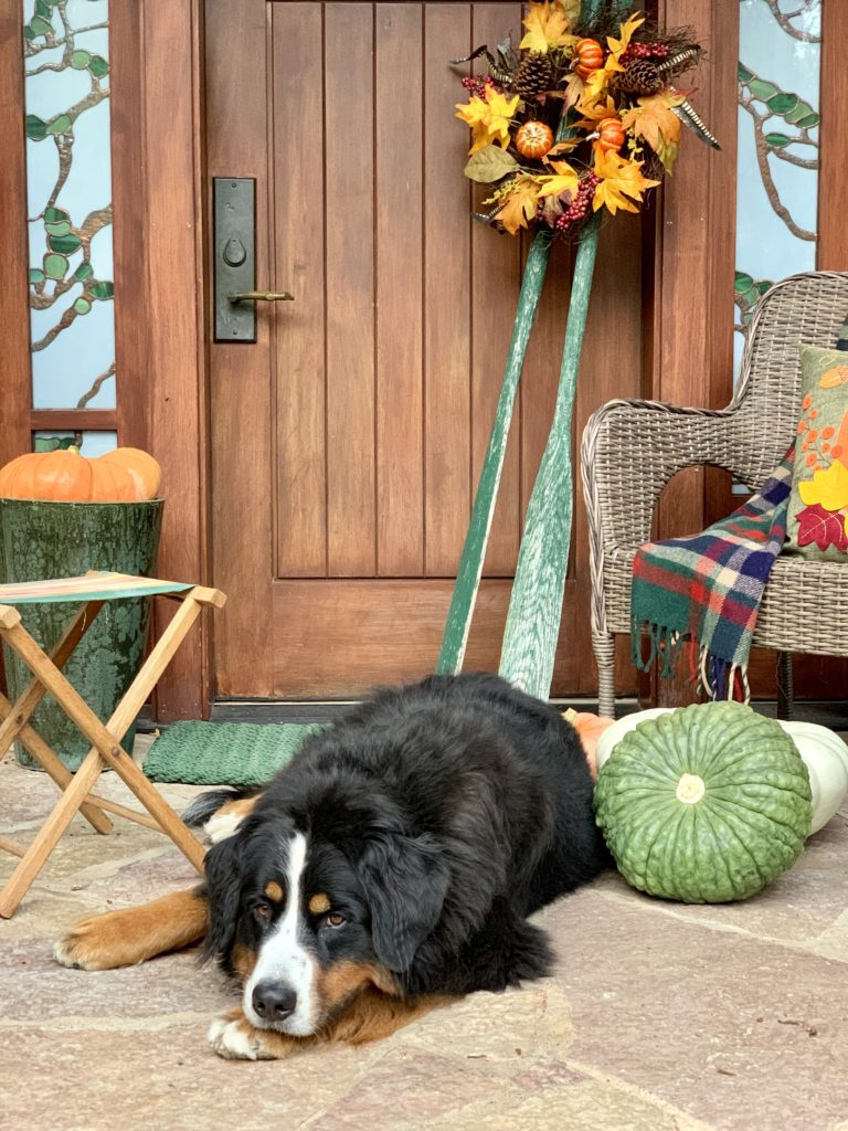 Fall Porch at Lake Cabin with Bernese Mountain Dog Laying Down