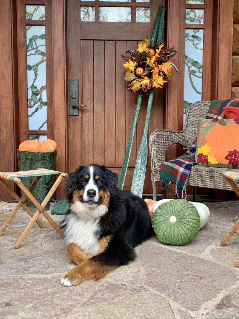Fall Porch at Lake House Cabin with Bernese Mountain Dog