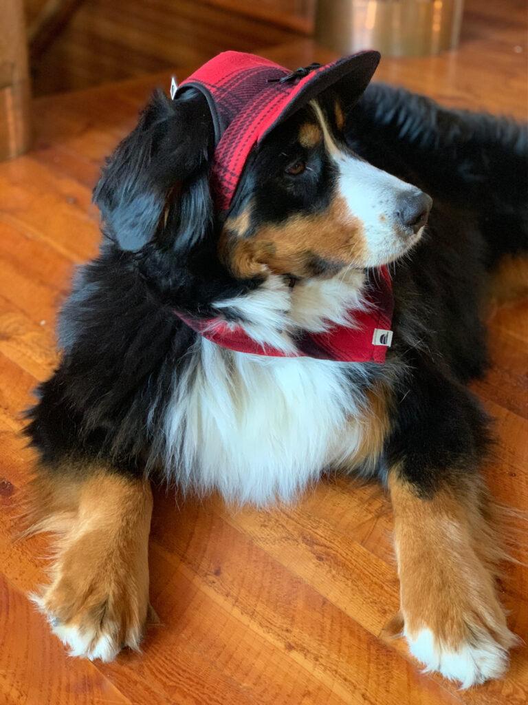 Stormy Kromer Dog cap and bandana