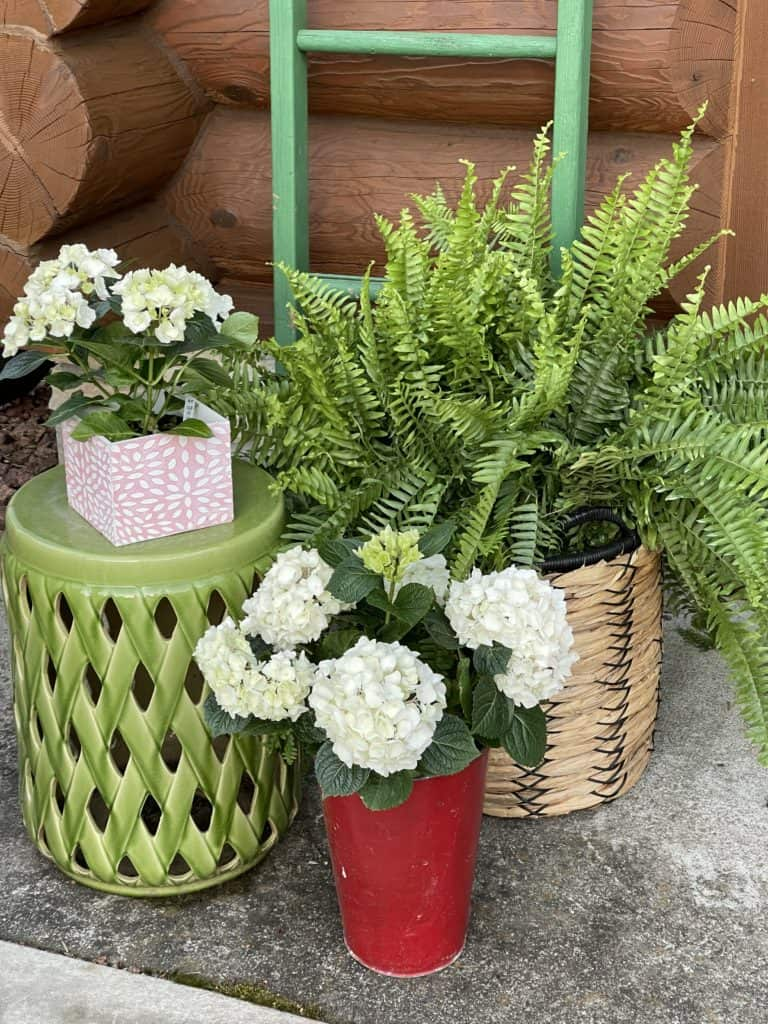Ferns and Hydrangea on the Porch