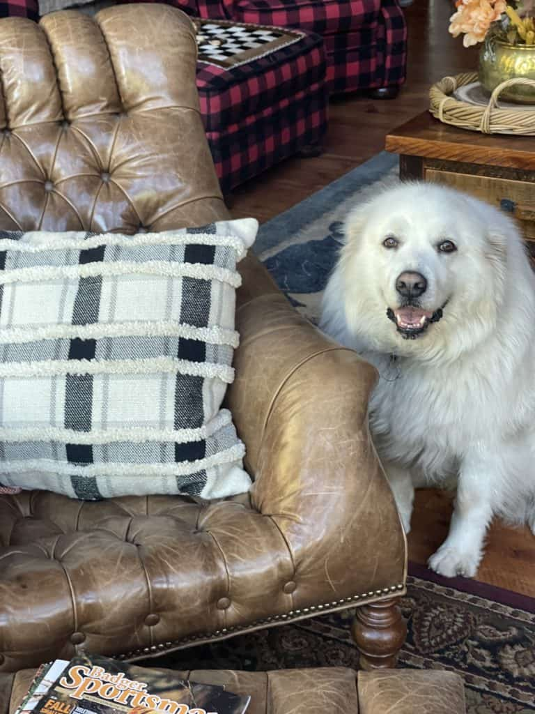 Fall Decor with Honey the Great Pyrenees